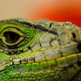 by Rizki Choirul - Animals Reptiles