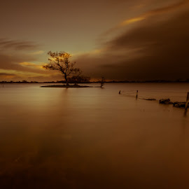 Tree on the island by Lukasz Kazmierski - Landscapes Waterscapes ( water, tree, sunset, lake,  )