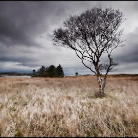 Alone by Ian Pinn - Landscapes Prairies, Meadows & Fields ( clouds, field, scotland, tree, mull, rain )