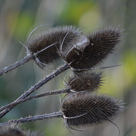 by Wendy Williams - Nature Up Close Other plants