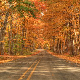 Cram in Fall by Sean Doran - Landscapes Forests ( northern, michigan, season, oak, fall, road, country, maple )