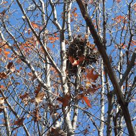 by Grace Sarazin - Nature Up Close Hives & Nests
