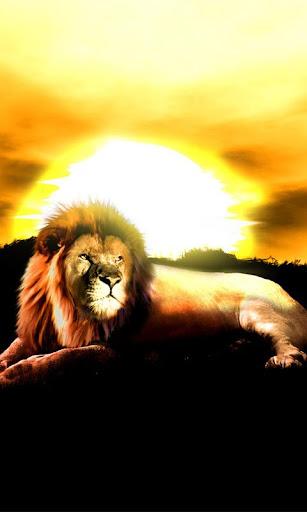 Lion Sunset Live Wallpaper