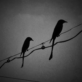 Winter Birds by Pratik Patel - Black & White Animals ( #lovebirds #winterbirds #birds,  )