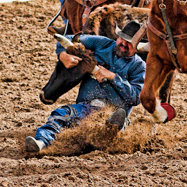The Slide by David Dise - Sports & Fitness Rodeo/Bull Riding