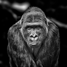In Your Face by Ron Meyers - Black & White Animals
