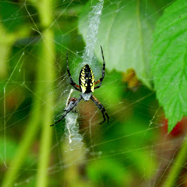 Writing A Story by Gail Singer - Nature Up Close Webs