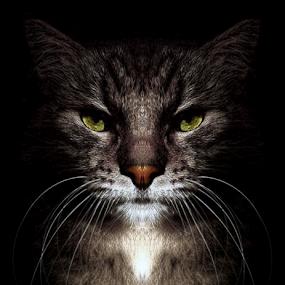 *** by Jurijs Ratanins - Instagram & Mobile Other ( wishkers delete   mobilography ·   cat ·   portrait ·   eyes ·  wishkers )