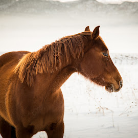 Horse & Fog by Shane Egan - Animals Horses ( farm animals, animals, nature, horses, fog, horse, morning,  )