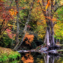 Meeks Park in Fall by Greg Mimbs - City,  Street & Park  City Parks ( water, reflection, peaceful, butternut creek, beautiful, georgia, meeks park, greg mimbs, ga, wnc, north carolina, fall color, mountains, nc, autumn, fall, creek bank, blairsville, union county, colorful leaves, north georgia, trees,  )