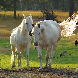 by Giselle Pierce - Animals Horses