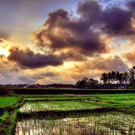 Sawah by Randi Pratama M - Landscapes Prairies, Meadows & Fields ( field )