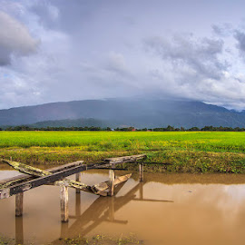 Paddy field at Guar Chempedak, Kedah by Ithni Shaari - Landscapes Prairies, Meadows & Fields ( water, mountain, sky, paddy field, wood, horizon, crops, bridge, landscape, panoramic, rain )