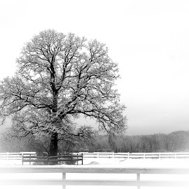 Snowy Tree  by Sue Matsunaga - Novices Only Landscapes (  )
