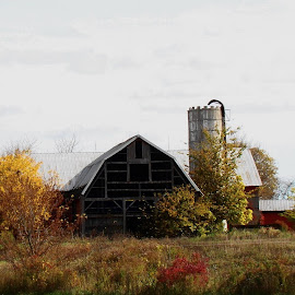 The decaying Barn by Yvonne Collins - Landscapes Prairies, Meadows & Fields