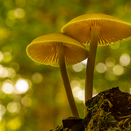 Two fungis on a stump by Peter Samuelsson - Nature Up Close Mushrooms & Fungi