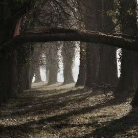 Uspavane by Andrea Šipuš - Nature Up Close Trees & Bushes (  )