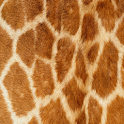 Giraffe Keyboard Skin icon