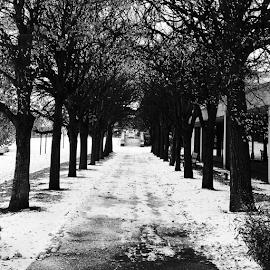 Tree Tunnel by Lori Ellen - Instagram & Mobile Instagram