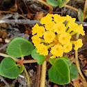 Coastal Yellow Sand-Verbena