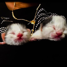 rescued by Noele Hachach - Animals - Cats Kittens ( kitten, new born, white, twins, black,  )