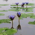 Reflecting Scenery icon