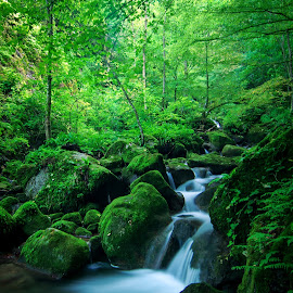 Wondrous forest  IX by Zoran Rudec - Landscapes Waterscapes ( stream, waterfall, forest )