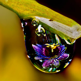 Drop with passion flower by David Winchester - Nature Up Close Natural Waterdrops