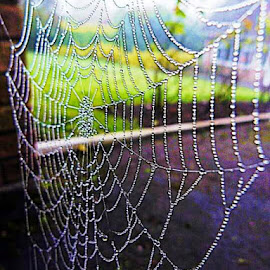 by Shelley Cooper - Nature Up Close Webs (  )