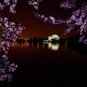 Cherry O' Cherry by Dan Girard - City,  Street & Park  Night ( water, reflection, dan_girard_photography, nature, 2014, dan girard photography, cherry bloosoms, washington dc, tidal basin )