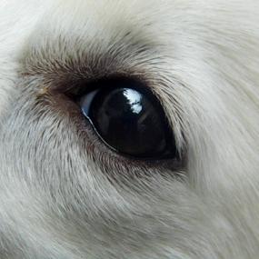 by Amal Vs - People Body Parts ( dog, eyes )