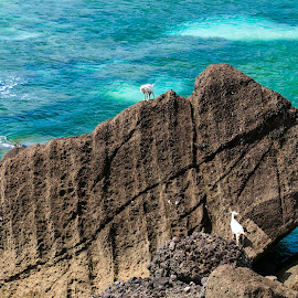 The Rock by Victor Roman - Nature Up Close Rock & Stone ( goats, d300, rock, batanes, nikon,  )