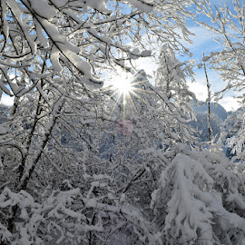 Snow in Savoie (Le Morel) by Yannick Faven - Nature Up Close Trees & Bushes ( mountain, winter, snow, trees, france, savoie, landscape, sun )