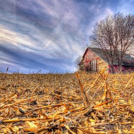 Cornhusked by Derrill Grabenstein - Landscapes Prairies, Meadows & Fields