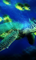 Screenshot of Turtle Wallpapers