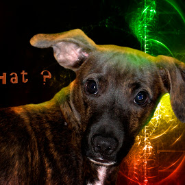 river by Dietmar Kuhn - Digital Art Animals ( abstract, moody, word, dog, light )