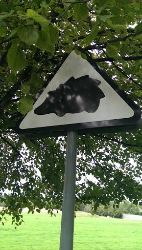 The Hedgehog Art
