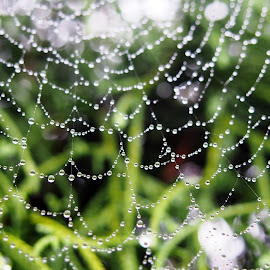 by Petra Cvetko - Nature Up Close Webs ( water, webs, nature, nature up close, morning dew, waterdrops, morning, spider web, droplets,  )
