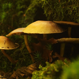 by Michael de Schacht - Nature Up Close Mushrooms & Fungi (  )