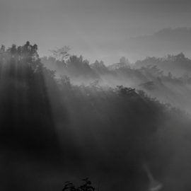 Misty Morning by Rigo Hidayat - Nature Up Close Trees & Bushes ( nature, bw, trees, magelang, setumbu, blacandwhite, sunrise, morning, bnw, misty )
