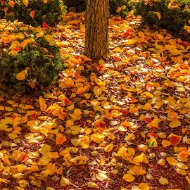 Autumn Leaves! by Leslie Nu - City,  Street & Park  Neighborhoods ( season, autumn, fall, leaves )