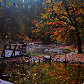 walking in colours by Danca Emanuel - Landscapes Forests ( fall, color, colorful, nature )