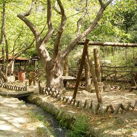 paidiko hara by Liliana Lesu - City,  Street & Park  City Parks ( tree, wood, nature, park, greece,  )