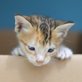 by Kitkat Katrina - Animals - Cats Kittens