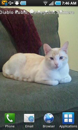 CatShare Cat Sharing Wallpaper