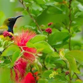 Single bird. by Katheline Killah - Novices Only Wildlife