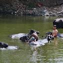 Buffalo bath