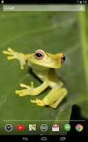 Screenshot of Tree Frogs Live Wallpaper