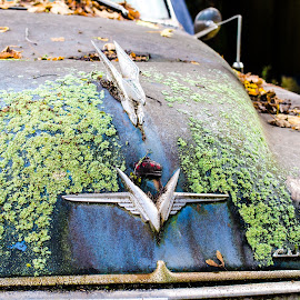 Chrysler by Cory Bohnenkamp - Transportation Automobiles ( car, chrysler, old, automobile, moss, classic, decay,  )
