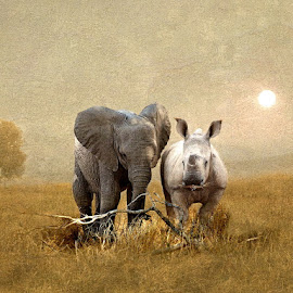Brothers in Arms by Bjørn Borge-Lunde - Digital Art Animals ( wild animal, animals, wilderness, nature, elephant, wildlife, africa, rhino )